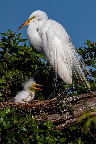 Family Nest 1
