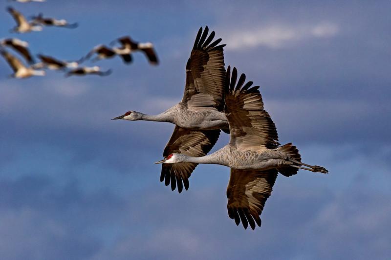 Crane Duet