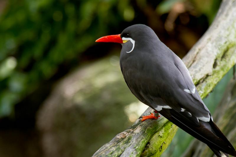 Dapper Bird