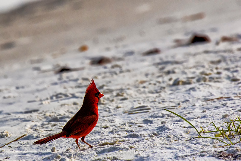 Cardinal Beach