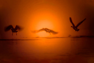 Abstract Geese in the Fog