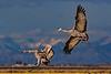 Landing Pair