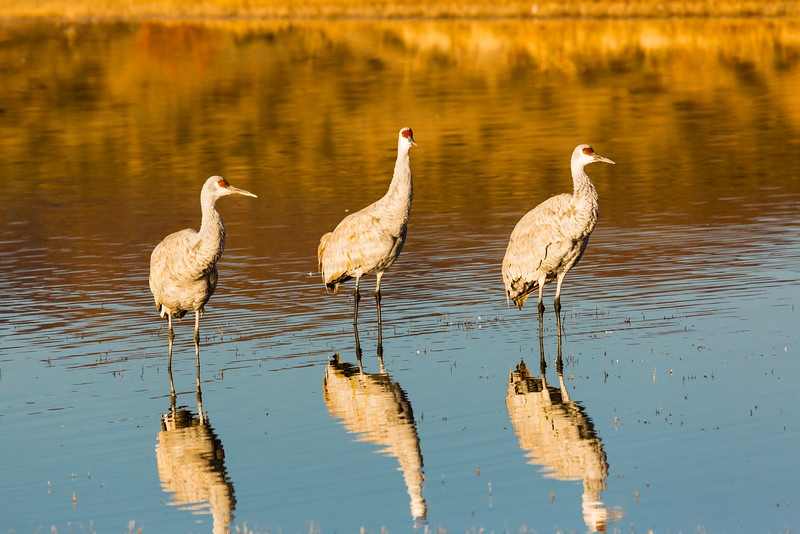 Three Wise Cranes