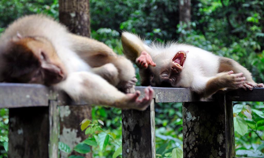 Orangutan Sanctuary Sipilok Borneo
