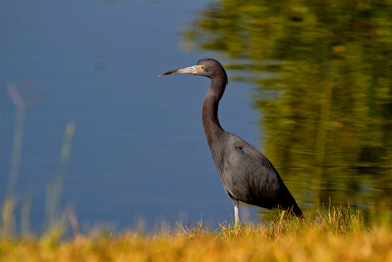 Crane Fishing 1