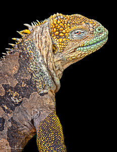 Darwin's Godzilla