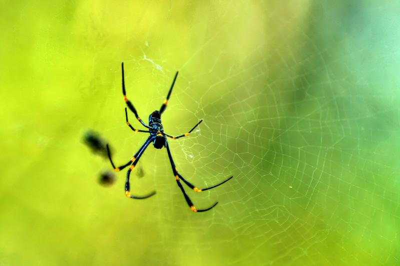 Sydney Zoo Spider, Australia