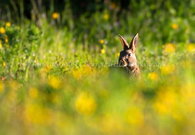 Rabbit0041