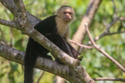 Monkey Smile :)
