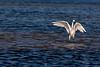 Egret Dance