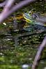 Bullfrog Marsh