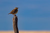 Meadowlark Post