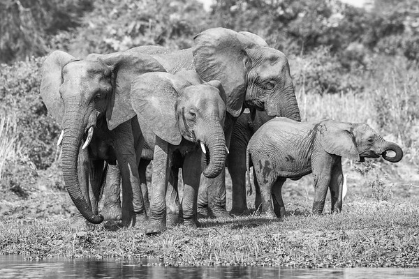 Family Portrait - Liwonde National Park, Malawi