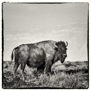 Armendaris Bison