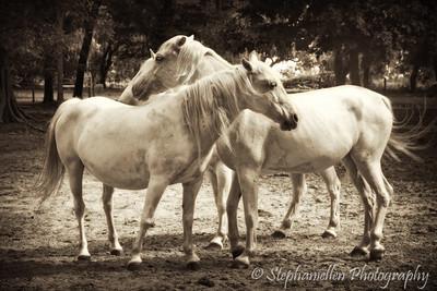 White Horses Sepia