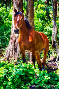 Horse in Forrest