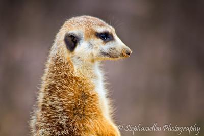 Meerkats Profile