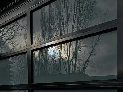 Dark Reflection, with Trees, Portland, 2019