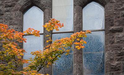 Maple Leaves, Church Windows, Portland, 2017