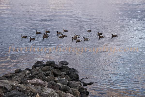 Millerton Lake Canadians