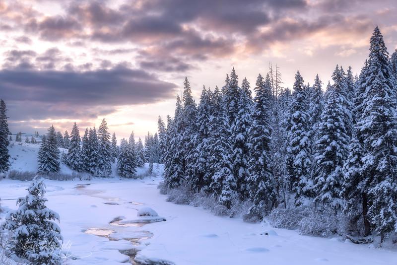 Icy morning - Lamar Valley, Yellowstone 2018 - Lamar Valley, Yellowstone 2018