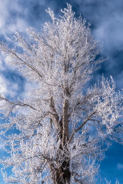 Wondrous Frost - Lamar Valley, Yellowstone 2018