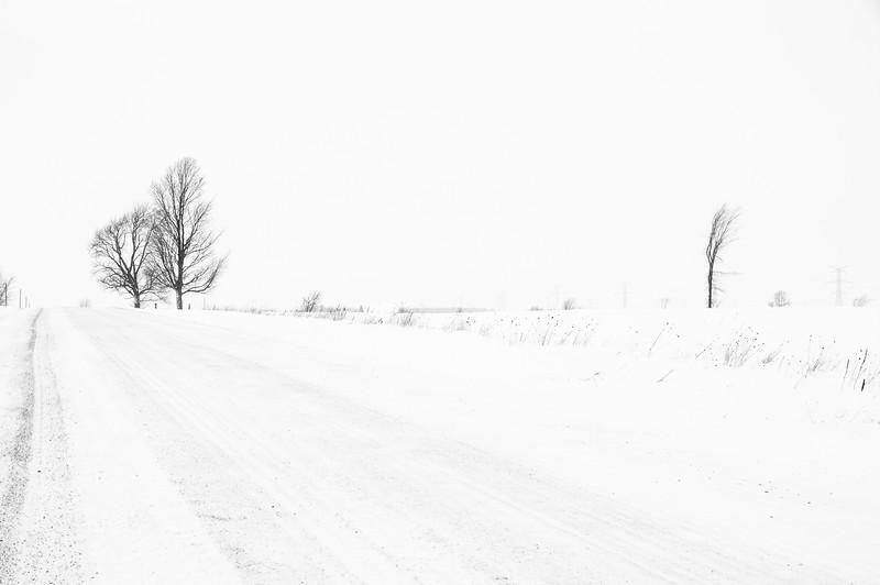 Road and Three Trees
