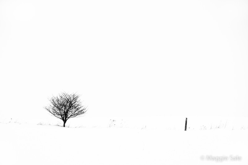 Tree and Fence Post, Caledon, Ontario