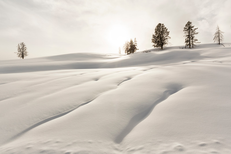 Winter Beauty in Yellowstone