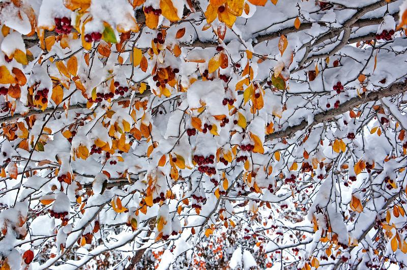 Snowy Tree 1