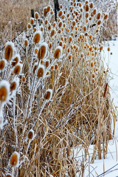 Frozen Prairie