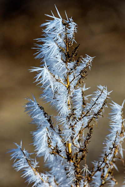 Frosted Weed 2