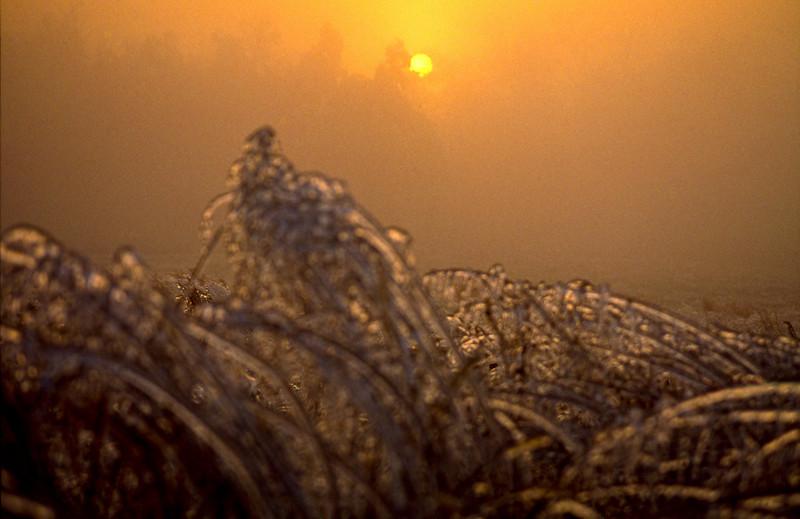 Ice Rise