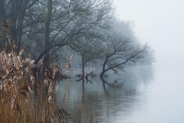 In the swamps III