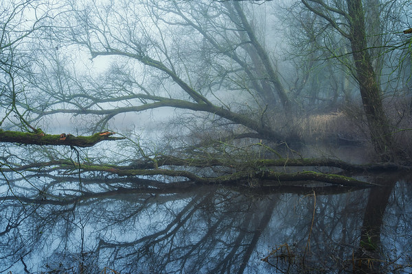 In the swamps II