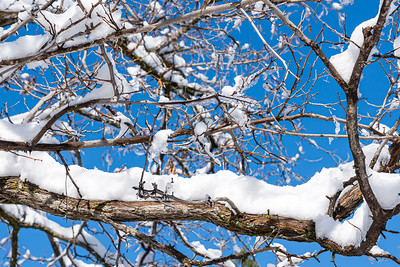 snow and ice covered tree branches with blue sky in the background