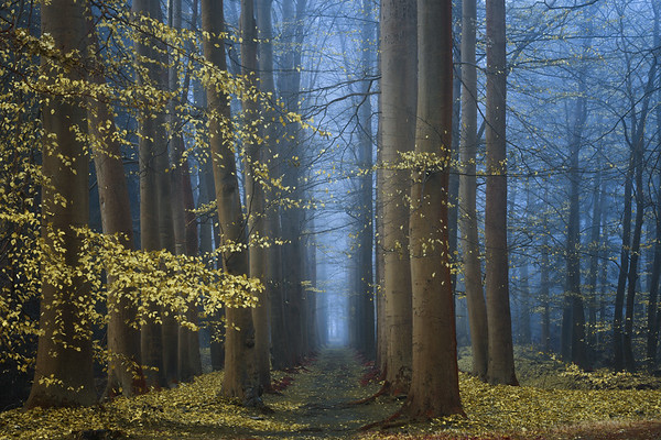 The art of forests