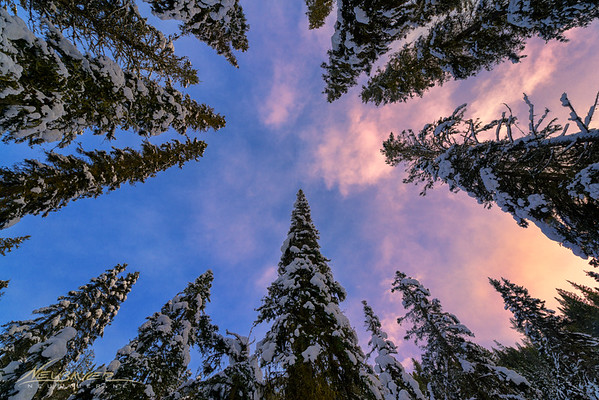 While hiking through a forest of pines one morning in early January, 2016 I found what people often pass by. A beautiful sunrise composition that is a little out of the ordinary. Look at these giant trees. There is truly beauty all around us!