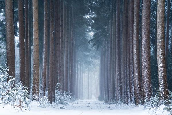 Polar winter