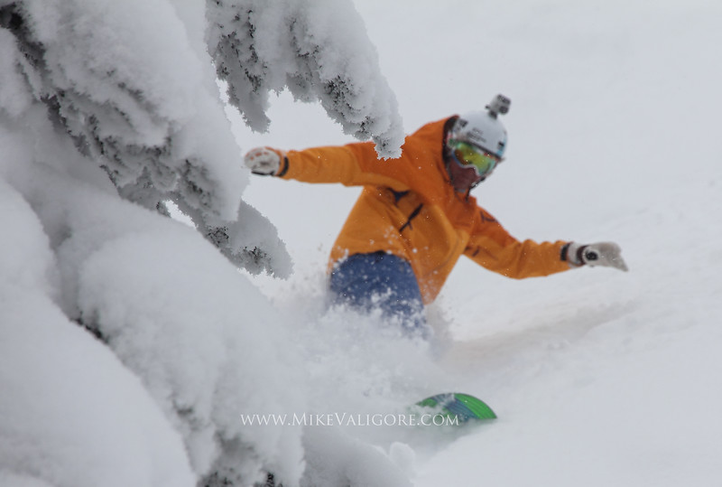 Tree and Snowboarder<br /> Kicking Horse, British Columbia