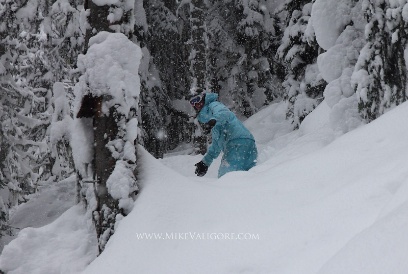 Revelstoke Snowstorm<br /> Ross Moore rides the trees at RMR