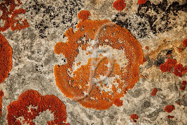 Stone Art I