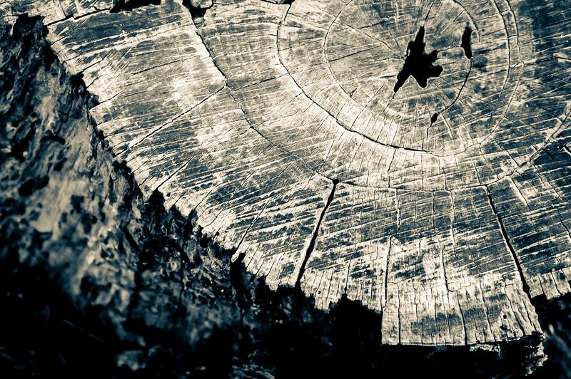 Old and Weathered Tree Stump, Split Tone