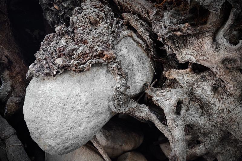 Bark Wrapped Rock