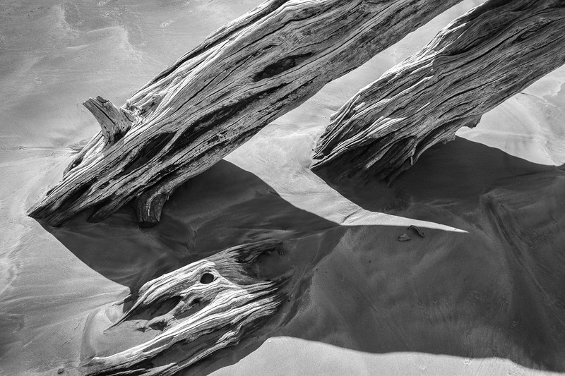 Smooth Wood Emerging from Wet Sand