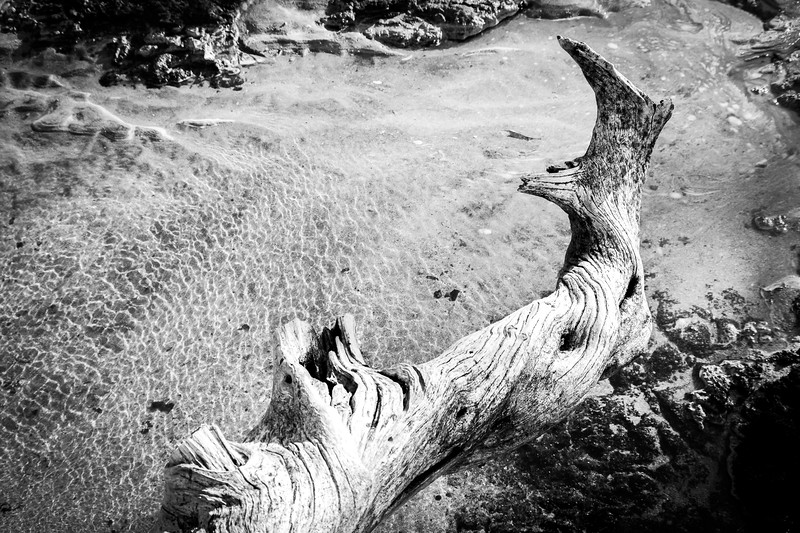 Old Wood and Rippled Water, BnW