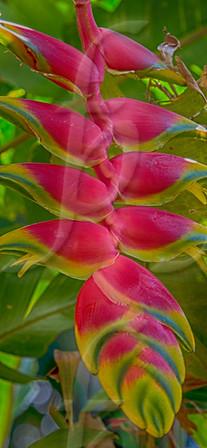 Nature's Paintbrush VII