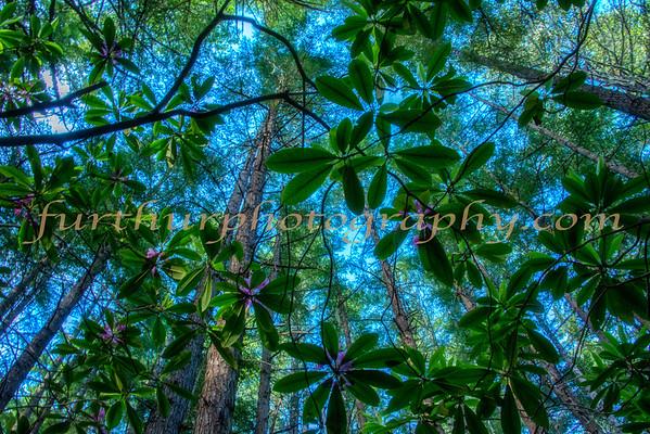 Woodland Art VII