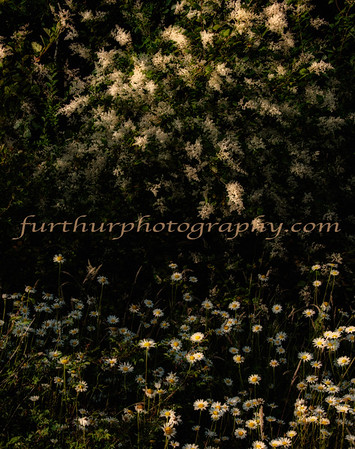 Woodland Art VI