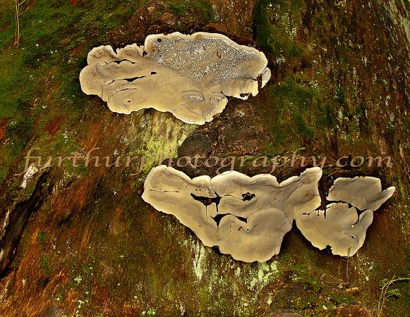 Woodland Art III